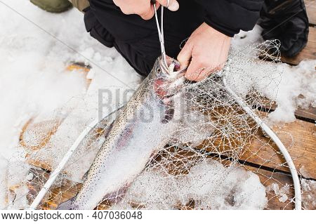 Fisherman Takes Hook Out Mouth Of Fish. Winter, Spring Fishing On Paid Snow Covered Ice Pond, Lake I