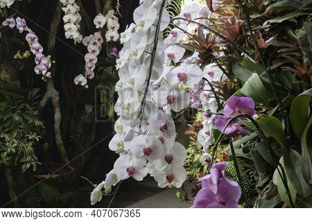 Ornamental Plant In The Garden, Stock Photo