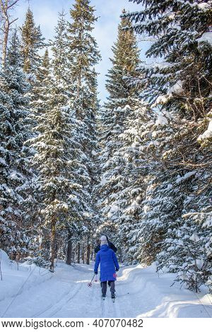 A Girl In A Blue Jacket Goes Skiing In A Snowy Forest In Winter. The View From The Back. Snow Backgr