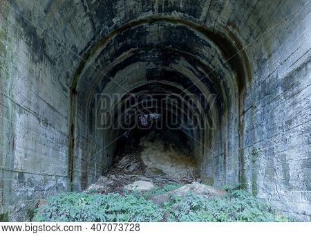 Ruined Laurel-glenwood Tunnel (aka The Glenwood Tunnel) Northern Portal, Once-popular And Historical