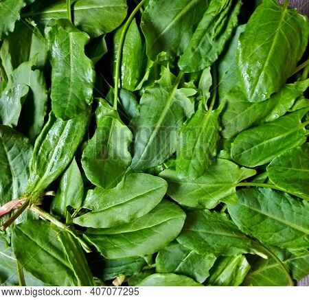 Fresh Organic Sorrel Leaves Pattern Background For Salad Or Soup. First Spring Greens - Sorrel (rume