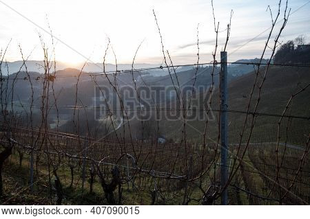A Vineyard With Vines In Autumn, Wine Growing In Viticulture