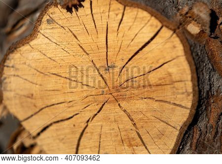 Cracked Tree Trunk Cross Section As Exposed Timber Shrinks. Deep Cracks, Natural Fissures, Natural S