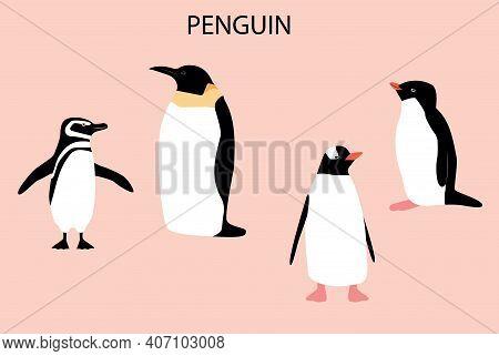 Illustration With Emperor Penguin. Cute Cartoon Character. Antarctica Bird.