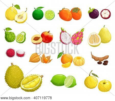 Cartoon Fruits Vector Quince, Peach And Pear, Fennel, Durian. Organic Mangosteen And Lime With Persi
