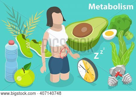 3d Isometric Flat Vector Conceptual Illustration Of Metabolism Of Human Body.