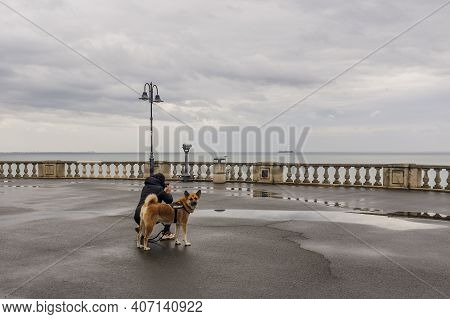 Girl With Guide Dog Taking Pictures With Phone Seascape. Girl With A Guard Dog Walking In The Park B