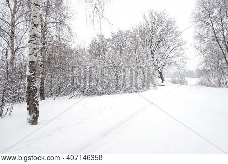 Beautiful Winter Landscape With Snow-covered Path In The Forest Among The Trees In The Cloudy Winter