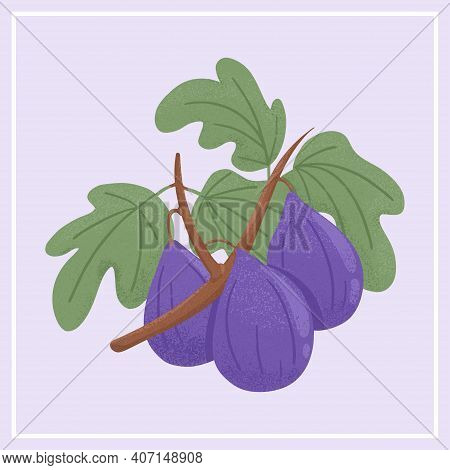 Ripe Figs. Sweet Figs Fruit On Branch With Leaves Vector Hand Drawn Illustration On Violet Backgroun