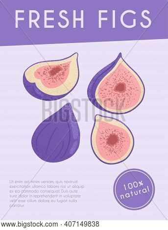 Fresh Figs Card Design. Sweet Figs Fruit On Branch With Leaves Vector Hand Drawn Poster Concept.