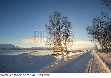 Sunny Winter Landscape- Sunset in winter snowy forest, big trees covered snow, empty ski road, beautiful weather - winter rest