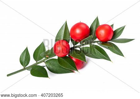 Butcher's Broom With Berries Isolated On White Background