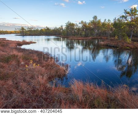Autumn Morning In The Swamp. Natural Landscape In The Ozernoye Swamp National Park   With Dry Yellow