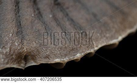 Mushroom Cap Texture, Mycetinis Scorodonius, Extreme Approximation, Macro Photography Of Mushrooms I