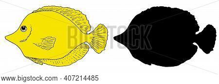 Zebrasoma Fish Vector Set Of Yellow Sketch And Black Silhouette. A Set Of Aquarium Fish Hand-drawn I