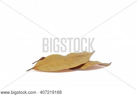 2 Dry Leaves Overlap On White Background With Clipping Path.