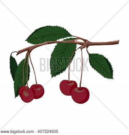 A Sprig Of Cherry-colored Cherries With Green Leaves. Vector Branch With Cherry Berries Isolated On