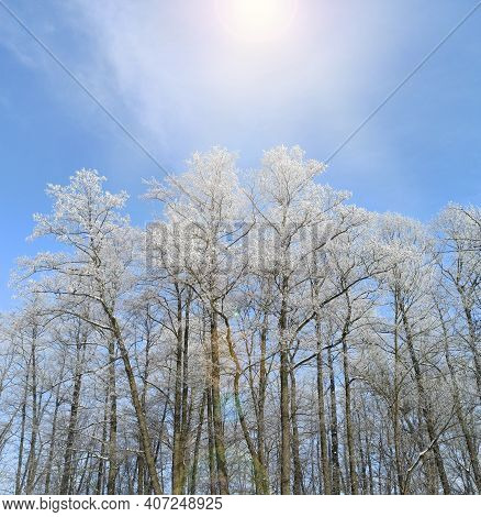 Trees Covered With Hoarfrost. Frosty Weather. Frosty Weather In January. Wonderful Winter In Forest.