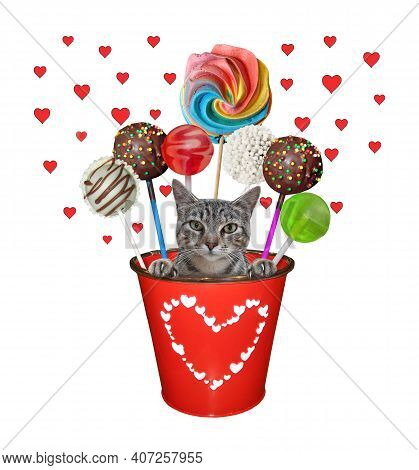 A Cat Gray Is Inside A Red Metal Pail With Sweets. White Background. Isolated.