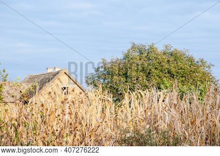 Cornfileds, Dried In Front Of An Abandoned Farm In Background, Decaying, Taken On The Plains Of Voiv