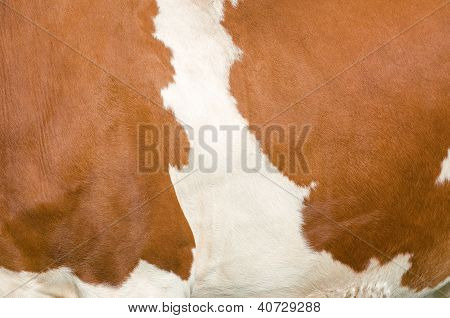 Texture of a mottled Cow