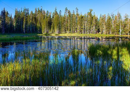 Quiet round grassy lake. The Tioga Road and Pass in Yosemite Park. Majestic coniferous forest are reflected in the smooth water of the lake. USA. North America