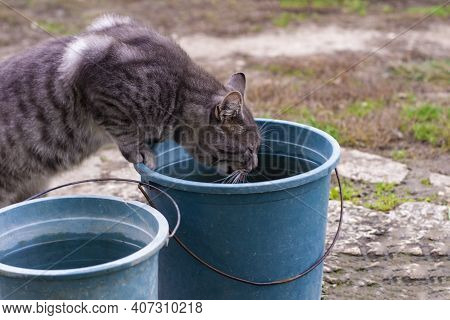 Curious Cat Peeks Into Plastic Bucket In The Garden. A Beautiful Gray-white Striped Pet Standing On