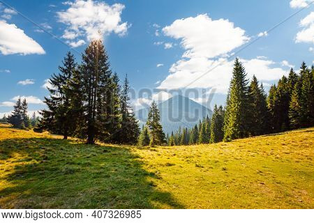 Sunny mountain landscape in summer day. Location place of Carpathian mountains, Ukraine, Europe. Vibrant photo wallpaper. Breathtaking nature photography. Discover the beauty of earth.
