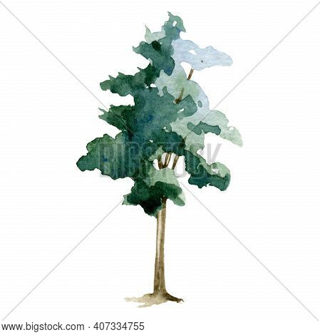 Green Tree Watercolor Illustration. Maple, Linden, Oak Plant. Hand Drawn Leafy And Evergreen Tree El