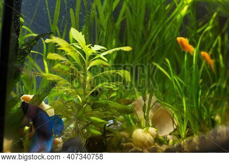 Aeration Home Aquaroum With Fish And Plants, By Filter-aerator.