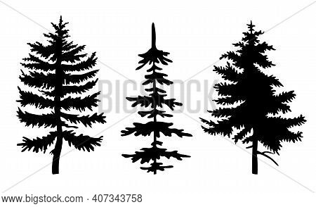 Set Of Black Silhouettes Of Fir-tree. Three Different Spruces. Simple Tree Icon. Nature Concept. Bla