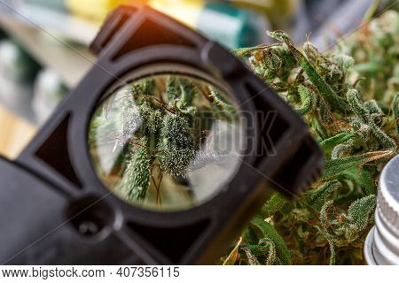 Green Leaves Of Medicinal Cannabis With Extract Oil.medical Marijuana Flower Buds. Hemp Buds - Medic