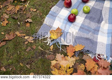 Autumn Photozone. Fall Decorations. Plaid, Apples, Leaves. In The Forest. Banner Or Greeting Card. C
