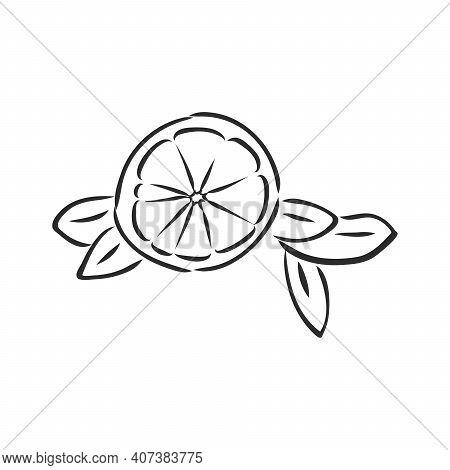 Hand Drawn Vector Lemon Slice, Piece, On Light Background. Lemon, Vector Sketch Illustration