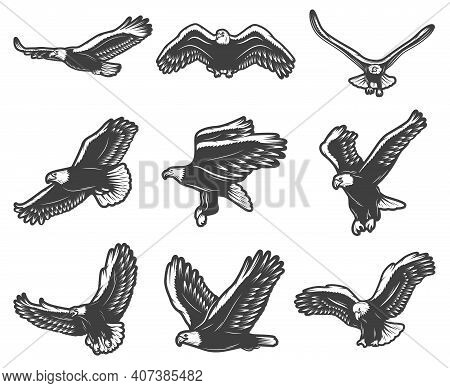 Vintage Beautiful Flying Eagles Set In Different Poses Symbolising Courage Pride And Majesty Isolate