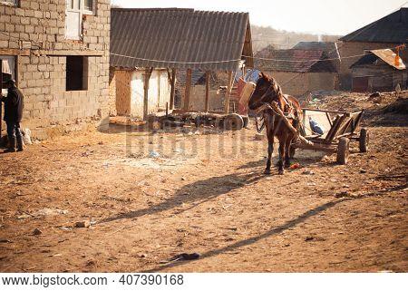 Serednie, Ukraine - March 09, 2011: Lonely Old And Decrepit Horse In Poor Village