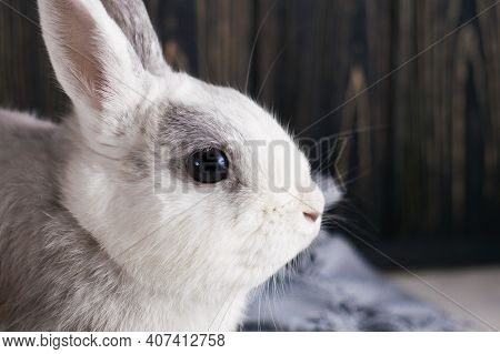 Soft Cute Curious Portrait White Rabbit Sits On The Table Near To Blue Plaid. Waiting Spring With Lo