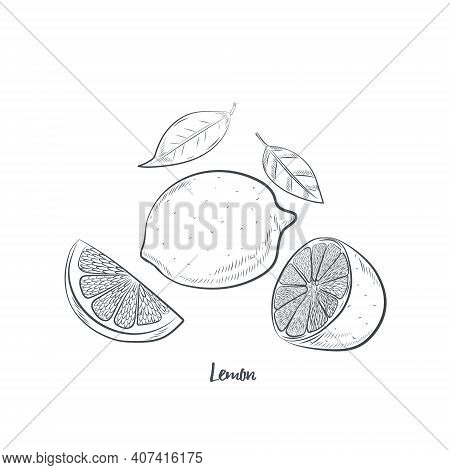 Lemon Fruit Sketch Vector Illustration. Hand Drawn Lemon Sketch Isolated On White Background.