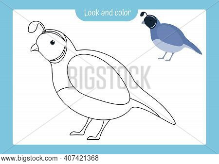Look And Color. Coloring Page Outline Of Quail With Colored Example. Vector Illustration, Coloring B