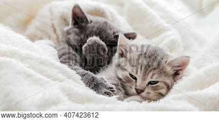 Unsatisfied Funny Kittens With Playful Muzzles. Disgruntled Kitten Covers Face With Paw. Kitten Roll