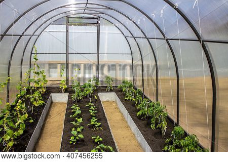 Greenhouse With Vegetables Young Seedlings In Spring, Gardening And Farming