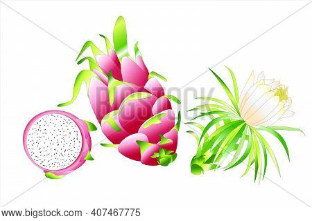 Dragon Fruit Pitahaya With Flover And Leaves