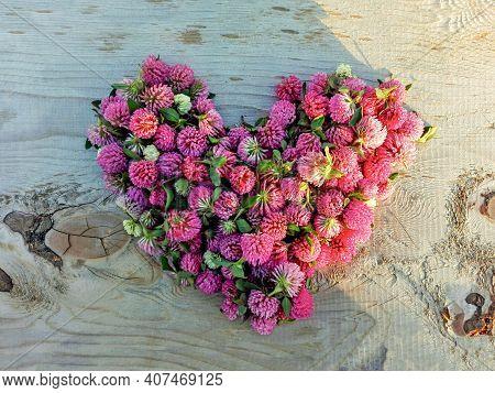Clover Flower Pink Heart On Wooden Background. Medicinal Herb Red Clover Flowers Heart Shape On Rust