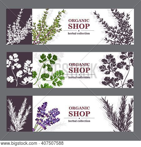 Herbal Cards With Herbal Spices And Fragrant Lavender On Sepia Horizontal Background Vector Illustra