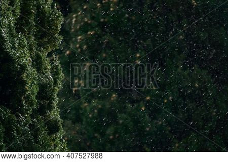 Blurred Background - Sudden Snowfall In A Subtropical Park, In The Foreground The Crown Of Cypress I