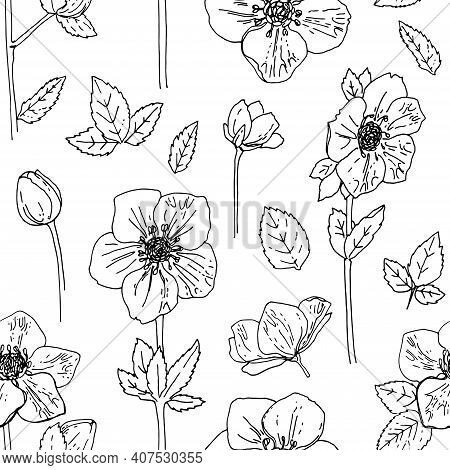 Pattern Flowers Vector Line Drawing. Hellebore Drawn By A Black Line On A White Background.