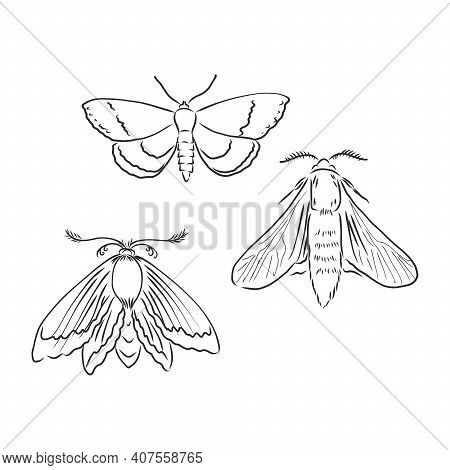 Butterfly Sketch. Detailed Realistic Sketch Of A Moth.moth Vector Sketch Illustration