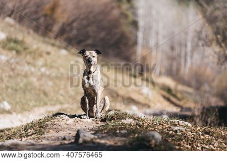 Dog In A Collar For A Walk. She Sits In The Sun Against The Background Of The Forest.