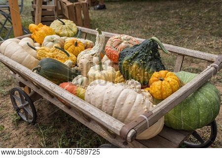 Yield Of Colorful Pumpkins In The Old Wooden Wagon