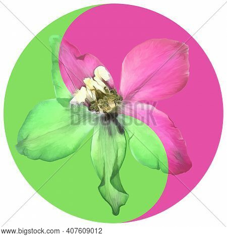 Floral Symbol Yin-yang. Delphinium. Geometric Pattern Of Yin-yang Symbol, From Plants On Colored Bac